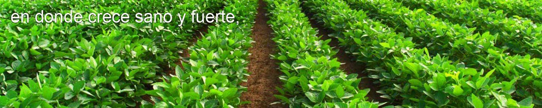 Abonos organicos México Cocoonhumus